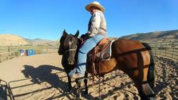 working a horseback, horse training