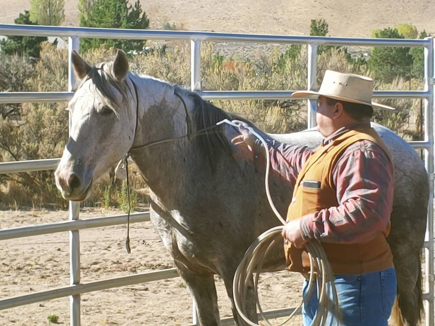 Unhandled Horse Gentling and Training