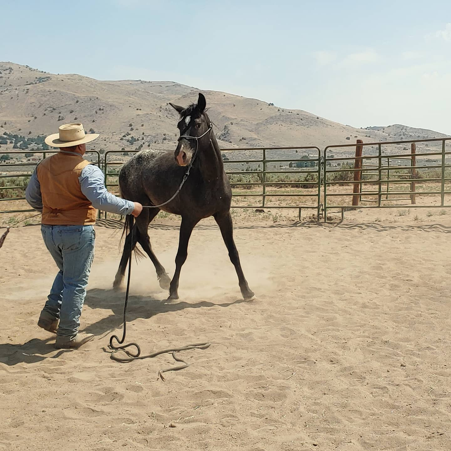 groundwork, wild horse training, horse training