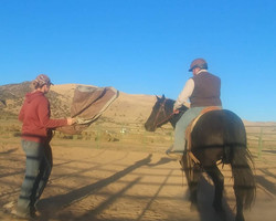 colt starting, wild horse training, mustang trainer