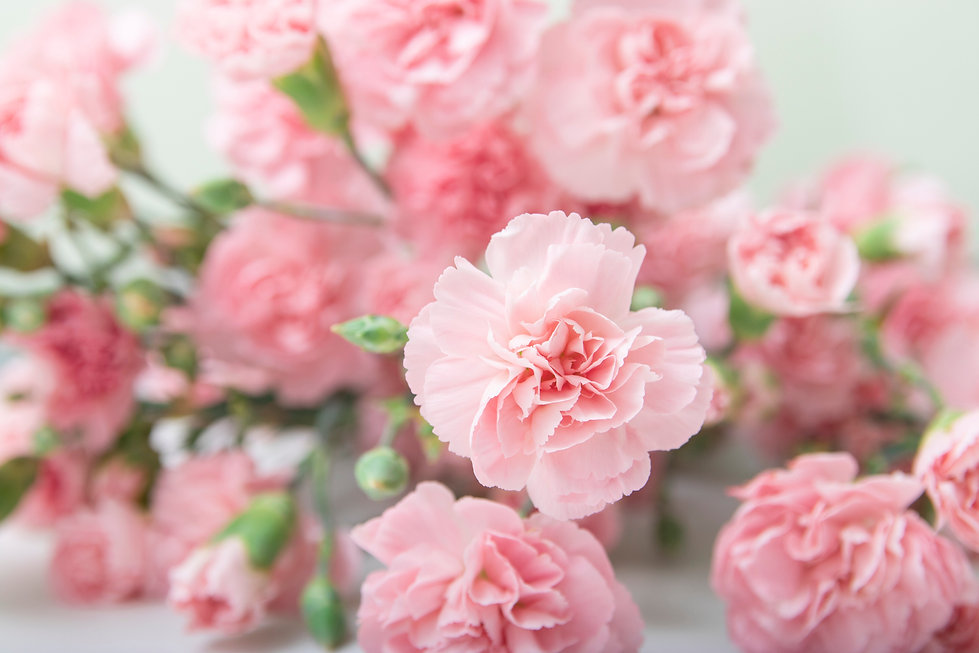 Small bouquet of pink carnations in on a