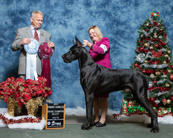 Select Dog and Best Owner Handler