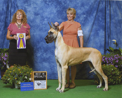 Best In Specialty Show
