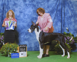 Winners Dog Best of Winners & Best Puppys