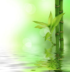 photodune-1564139-zen-bamboo-s.jpg
