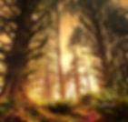 photodune-3973166-rain-forest-xs.jpg
