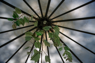 Hothouse Project Roof