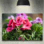 mounted+canvas.jpg