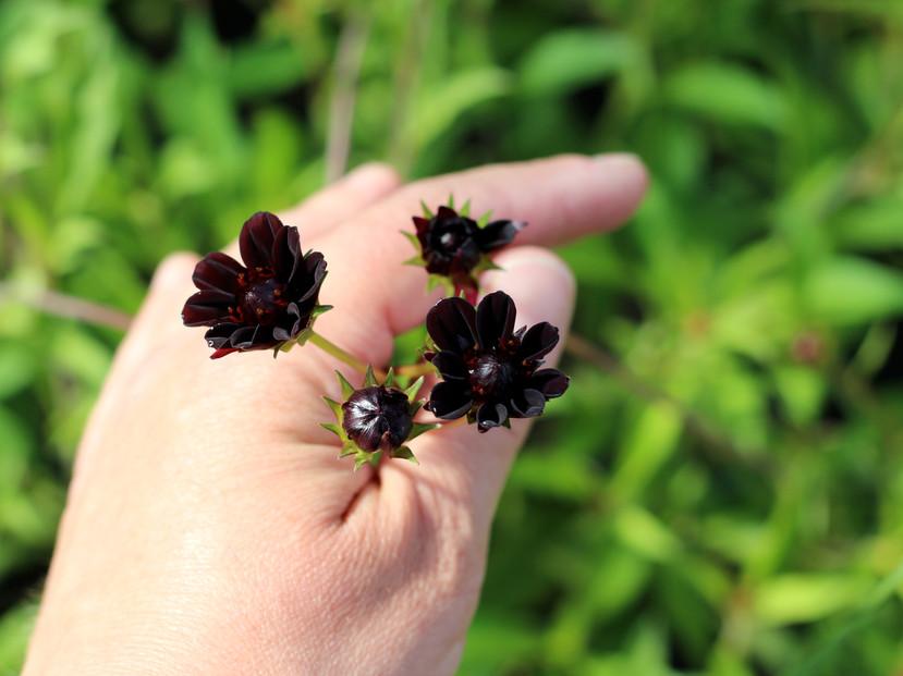 We grow little flowers