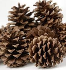 Ponderosa Pine Cones 100.jpg