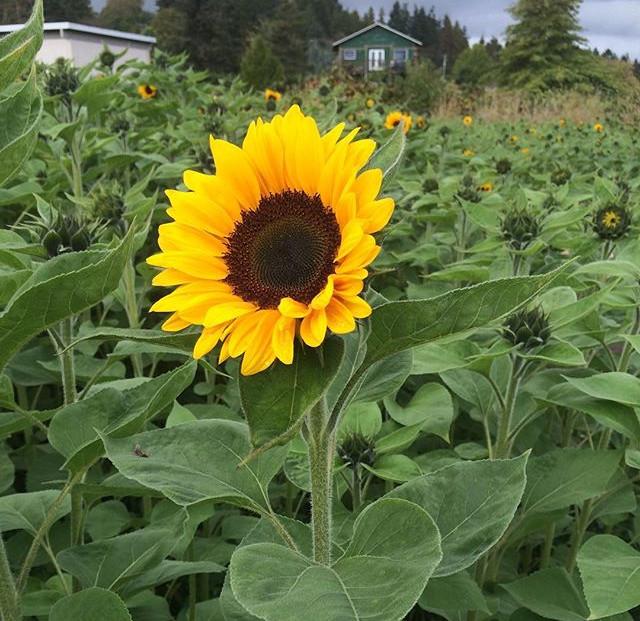 We grow big flowers