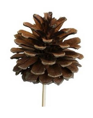 Cones Natural