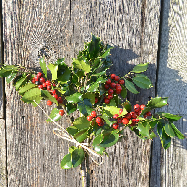 Evergreen Holly