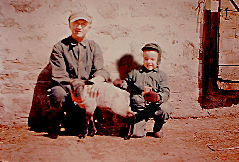 Grandpa and I with Sheep Full Screen 100