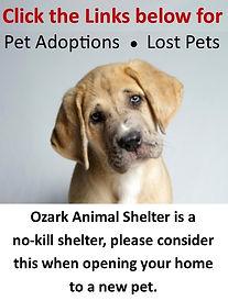 animal shelter.jpg