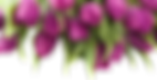 тюльпаны 1_edited.png