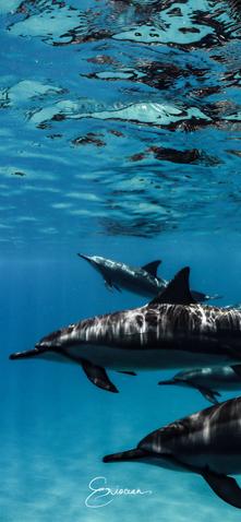 Dolphin Hawaii.png