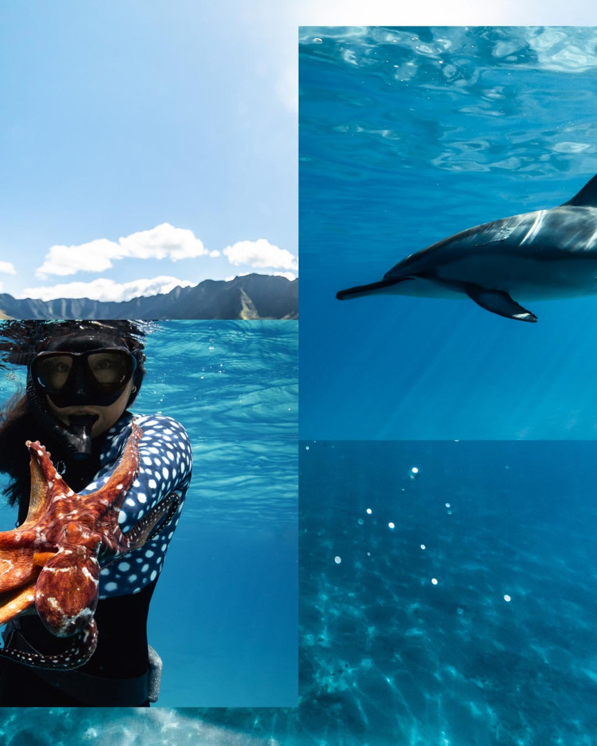 Unerwater Photo Hawaii-2.jpg