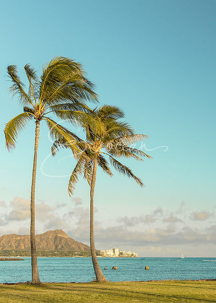 Hawaii Diamond Head, Palm Trees, Ocean Photography, Tropical Photography, Wall Art, Wall Print, Hawaii Picture