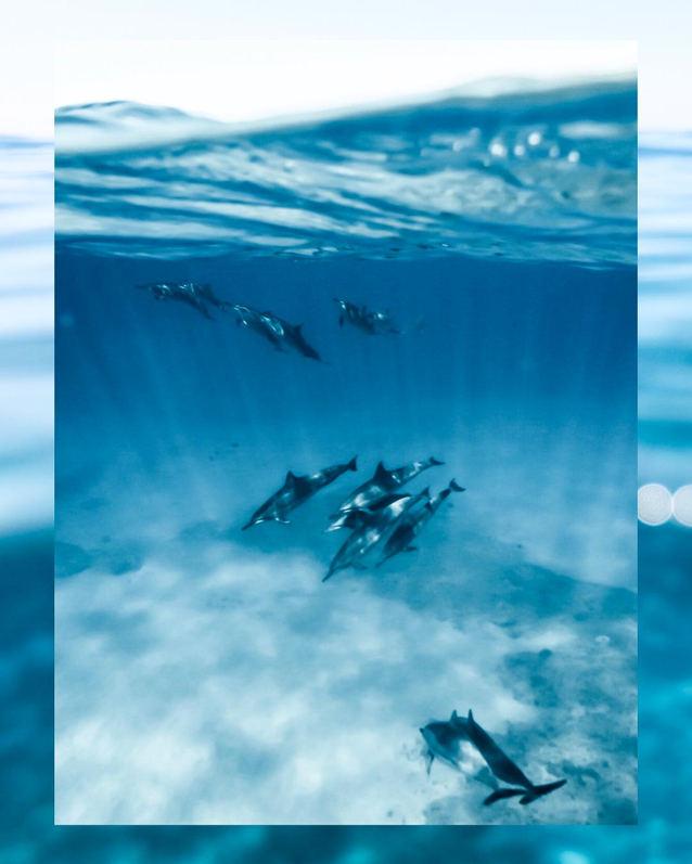 Dolphins-Hawaii.jpg