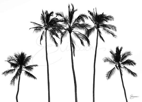 Hawaii Black & White Palm Trees, Modern Print, Tropical Print, Wall Art, Wall Print