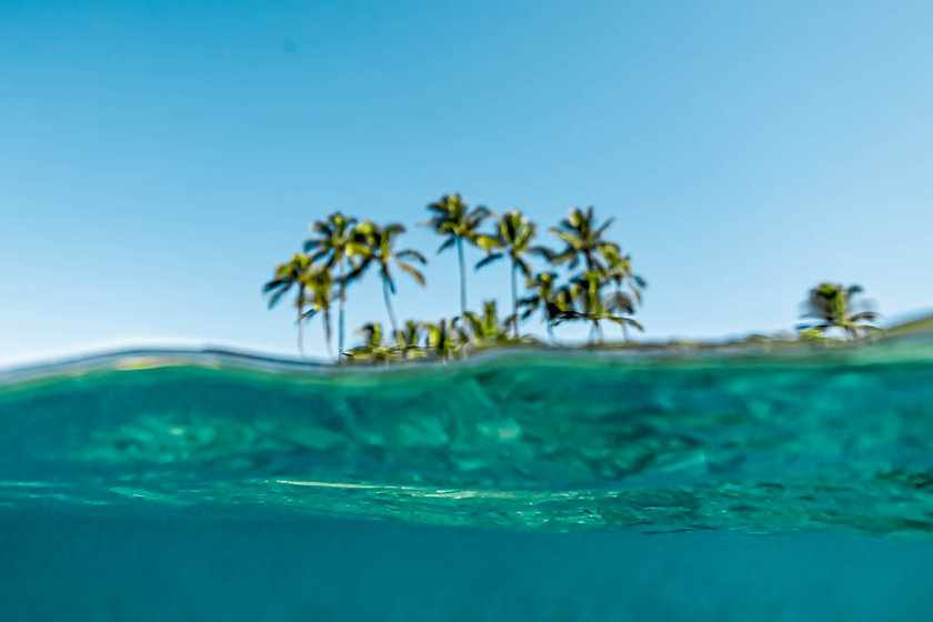 Tropical on the water-1.jpg