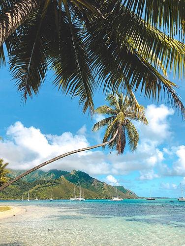 Tahiti Moorea Trip Palm Trees.jpg
