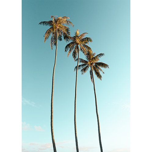 TRIO PALM TREES