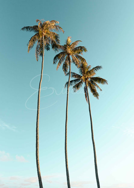 Hawaii Palm Trees Picture, Tropical Photo, Wall Print, Wall Art