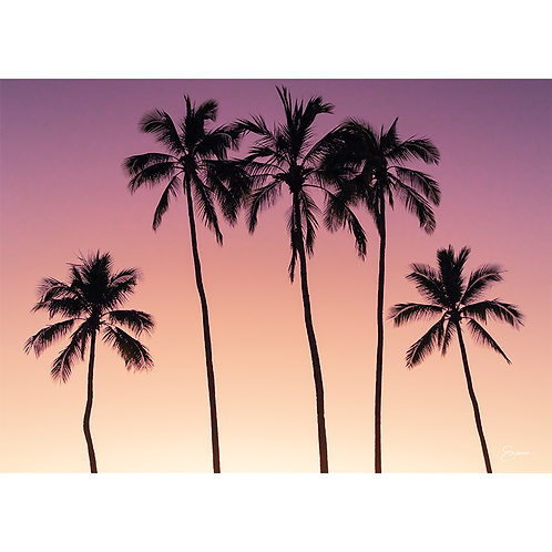 SUNSET PALMS, HALEIWA