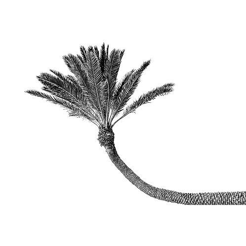 BLACK & WHITE SINGLE PALM TREE