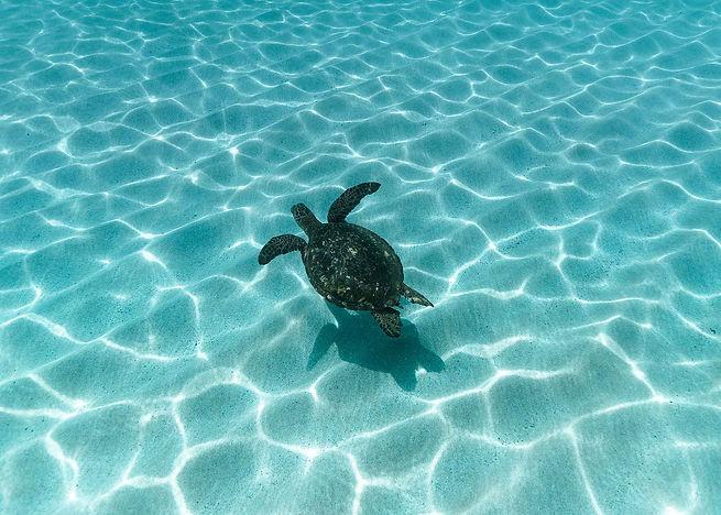 Turtle_Hawaii_2.jpg