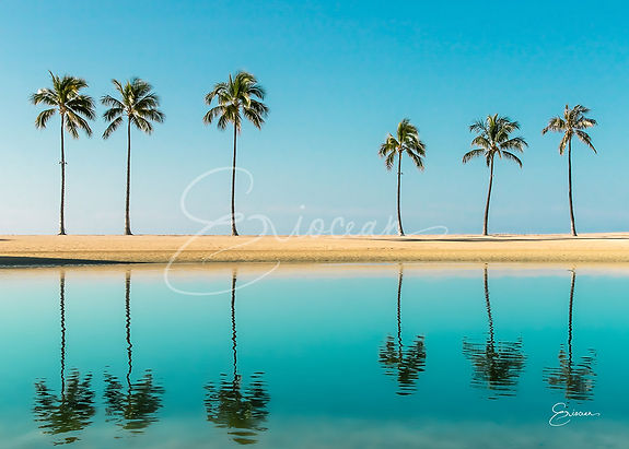 Hawaii Palm Trees Reflection Picture, Palm Trees Photography, Troical Print, Wall Art, Wall Print, Beach Decor, Tropical Decor