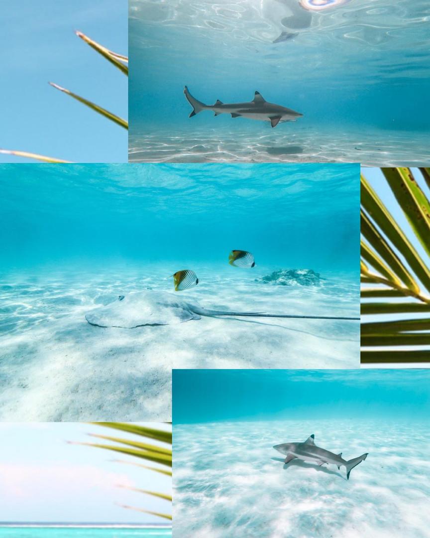 Moorea_Tahiti_Shark.jpg