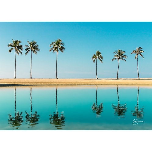 PALM TREES REFLECTION