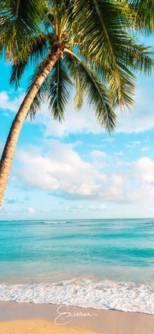 Hawaii Palm Tree.png