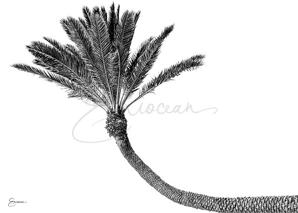 Hawaii Black & White Single Plam Tree, Palm Tree Wall Art, Wall Print, Palm Tree Picture