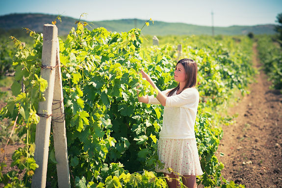 Vineyard Discovery
