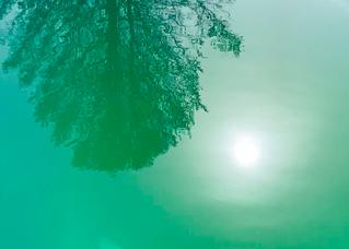 The Sign of Algae