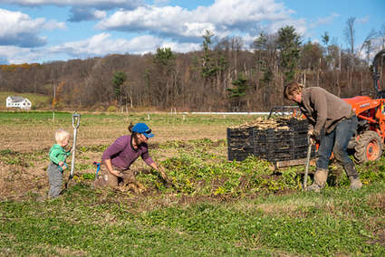 Child helping parents farm in The Catskills