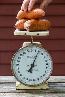 Sweet potatoes om an antique scale