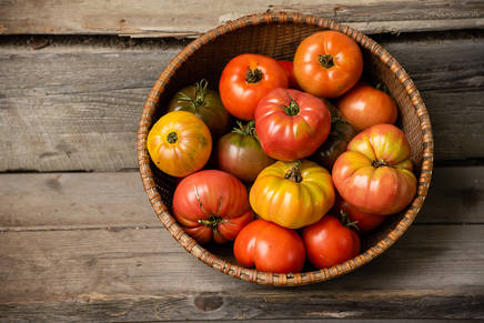 Tomatoes in a basket in the Catskills