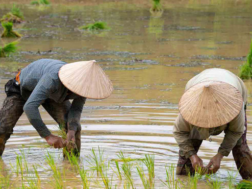 Laos: No Rice for Christians