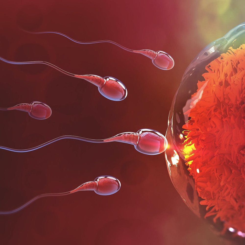 IVF-Past-Present-and-Future-Breakthroughs
