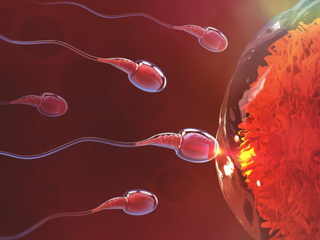 IVF - Past, Present, and Future Breakthroughs | Shivani Hospital & IVF