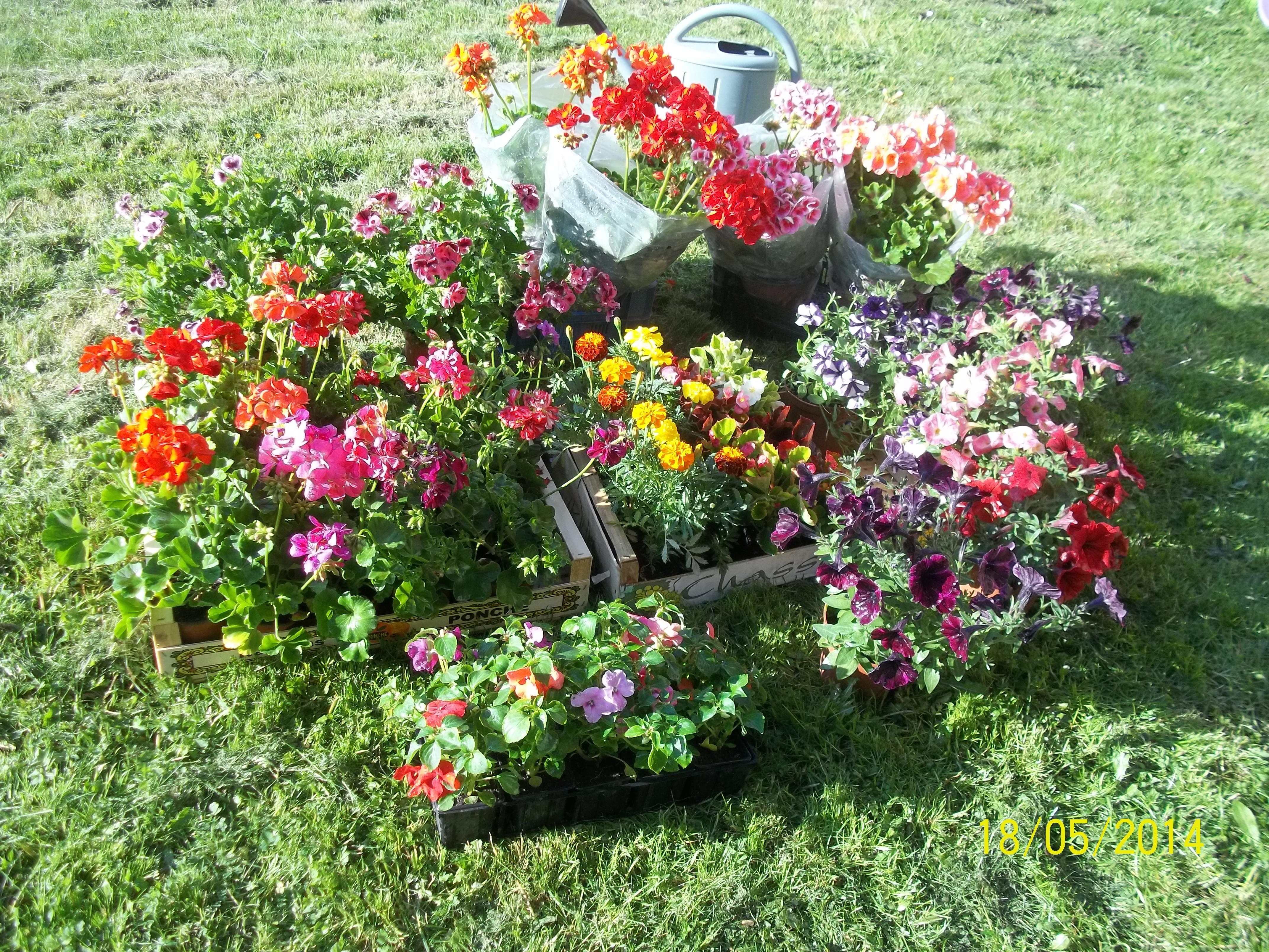 Proposition de fleurs...