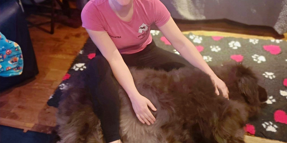 Beginners Guide to Canine Massage