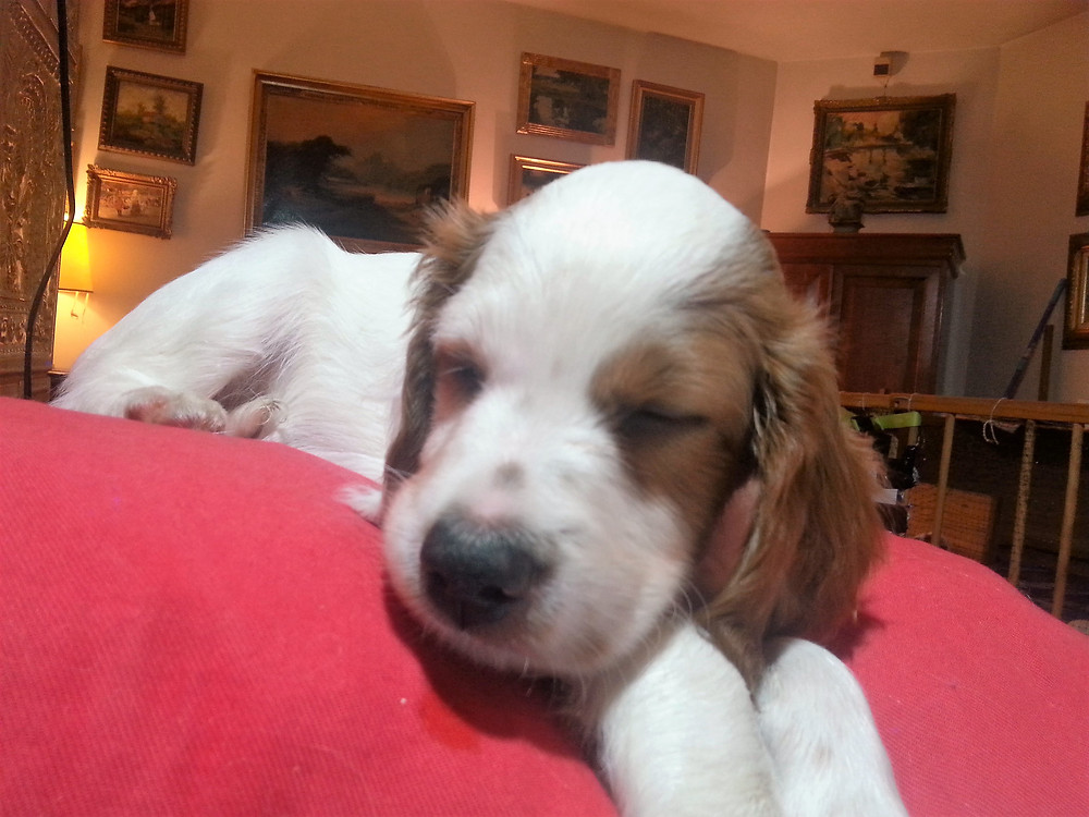 Annabella is now 7 weeks old and is playful and lovely.