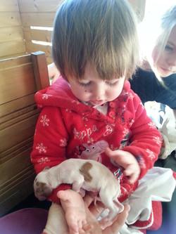 irish setter puppy0160130_125918