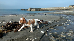 Brigid on beach